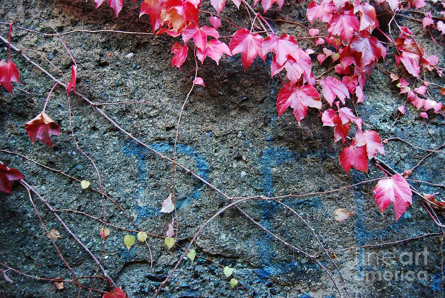 Autumn Photograph - Autumn 14 by Elena Mussi