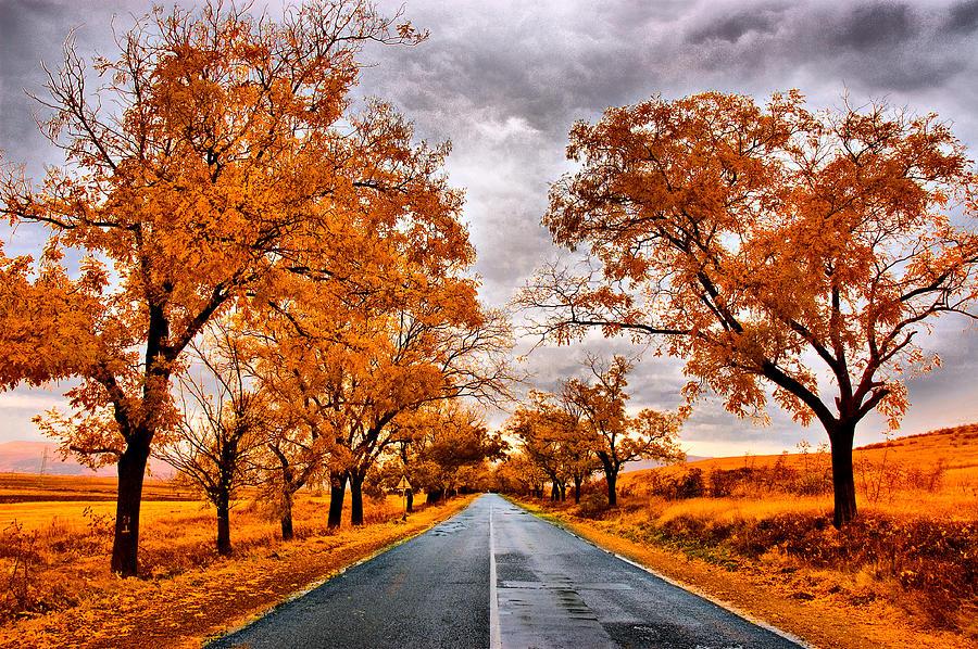 Autumn Photograph - Autumn - 4 by Okan YILMAZ