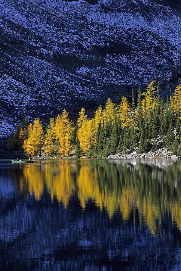 Banff Photograph - Autumn, Alpine Larch Trees, Lake Agnes by John Sylvester