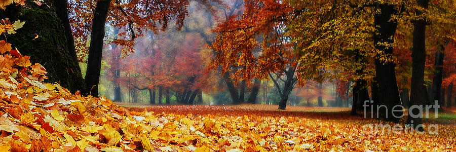 Autumn Photograph - Autumn In The Woodland by Hannes Cmarits