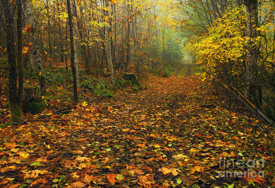 Country Lane Photograph - Autumn Lane by Mike  Dawson