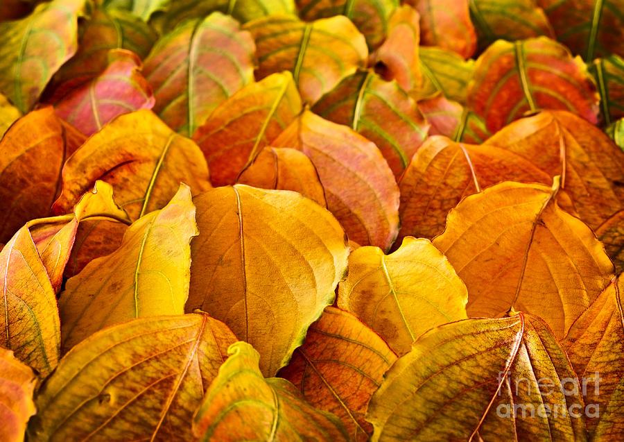 Leaves Photograph - Autumn Leaves  by Elena Elisseeva