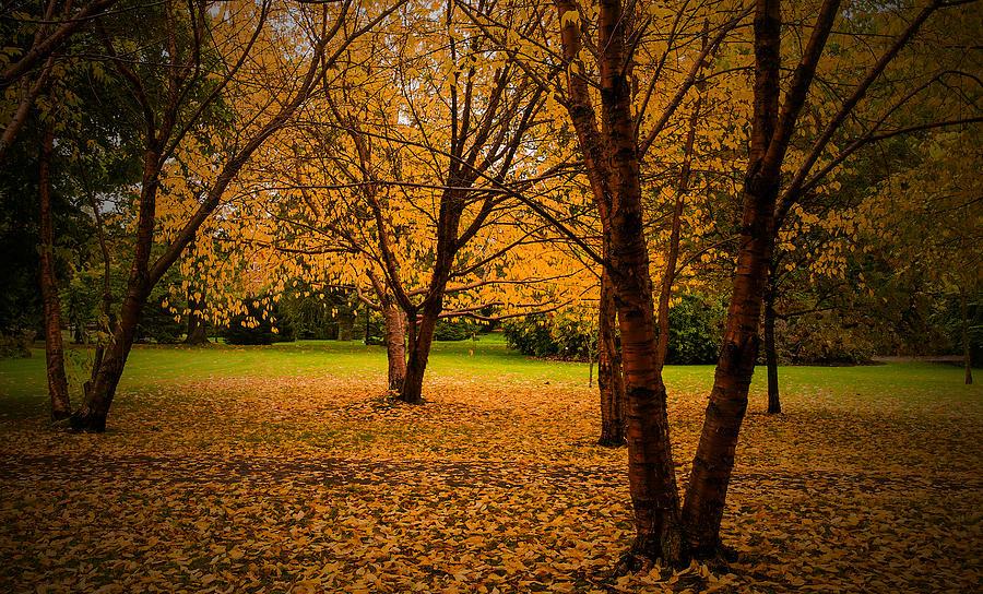 Autumn Photograph by Micael  Carlsson