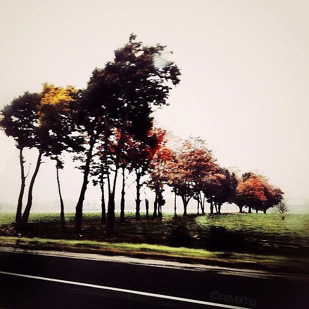 Fall Photograph - Autumn by Natasha Marco