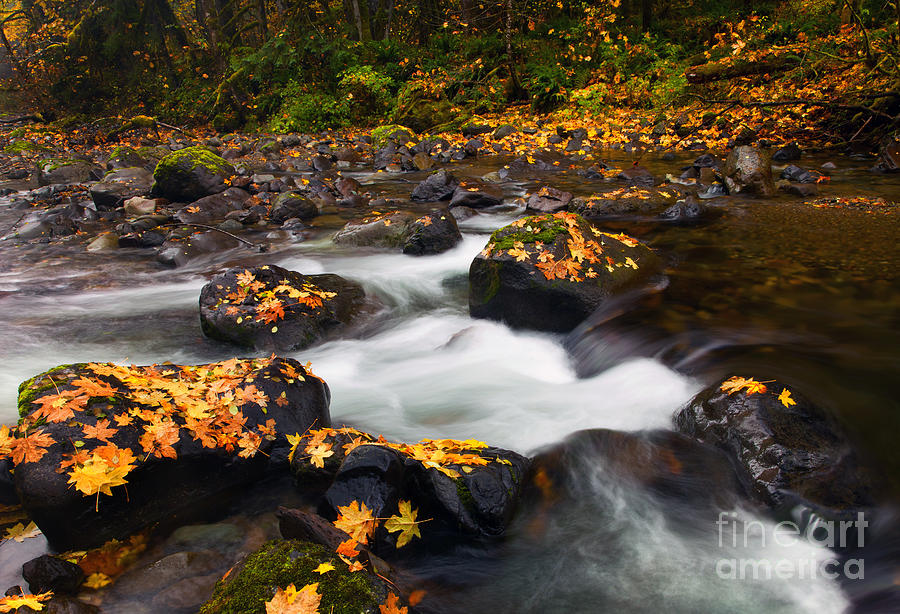 Skate Creek Photograph - Autumn Passing by Mike  Dawson
