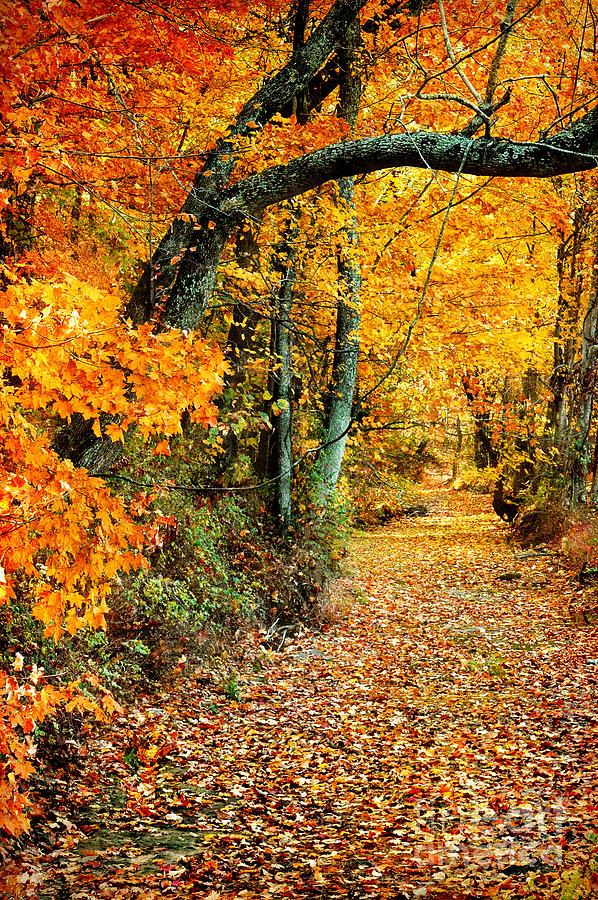 Autumn Photograph - Autumn Pathway by Cheryl Davis