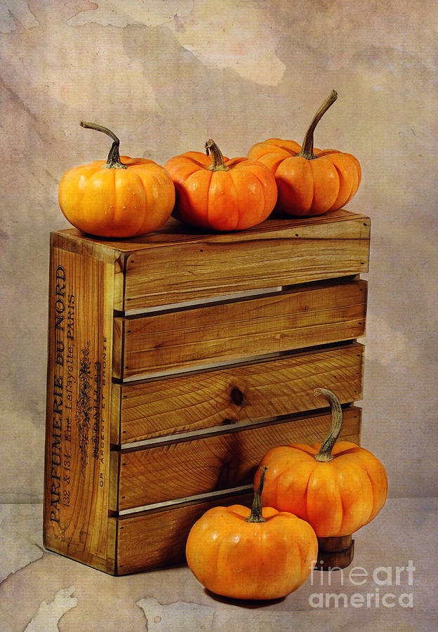 Pumpkins Photograph - Autumn Still Life by Judi Bagwell