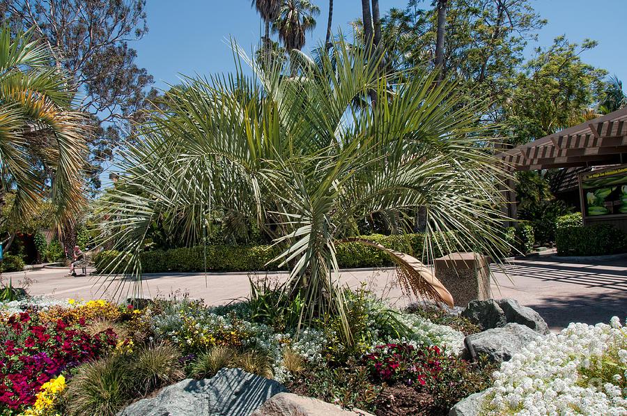 Balboa Park San Diego Digital Art By Carol Ailles