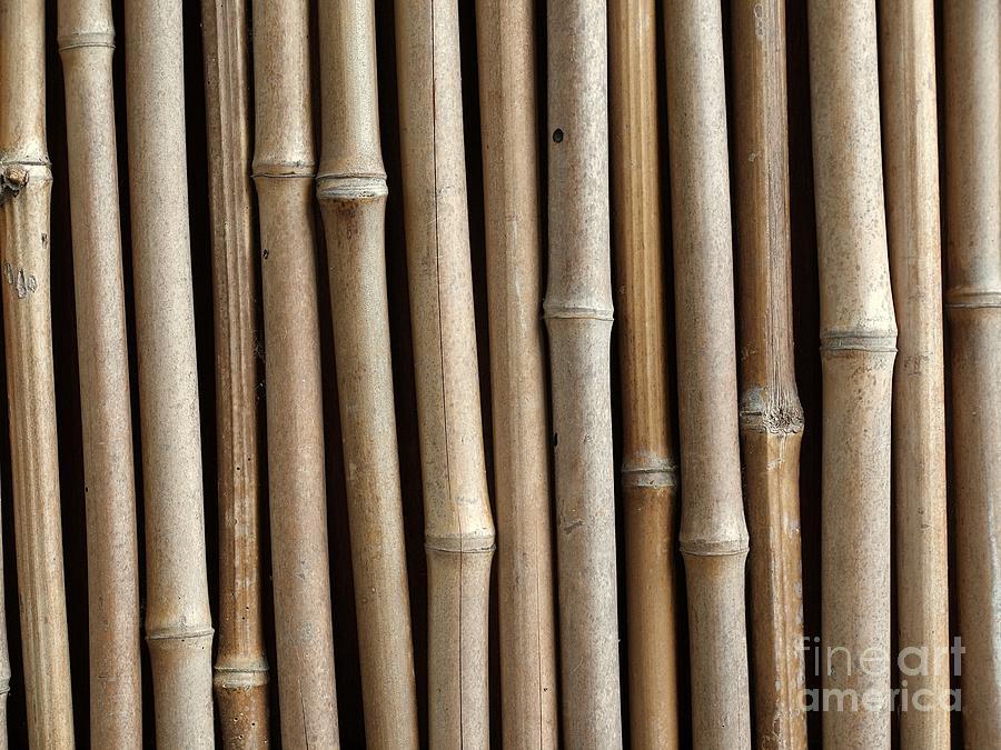 Bamboo Photograph - Bamboo Fence by Yali Shi