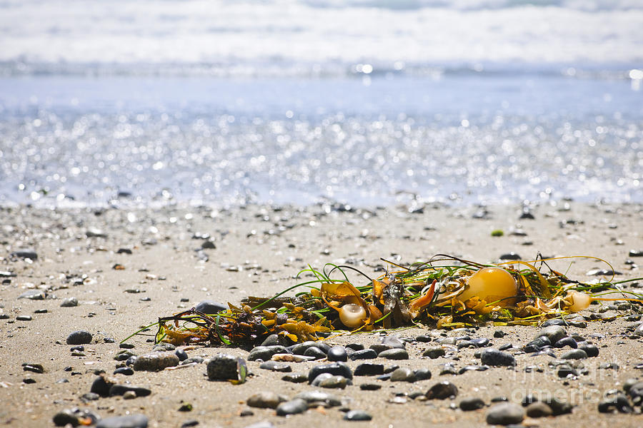 Pacific Photograph - Beach Detail On Pacific Ocean Coast by Elena Elisseeva