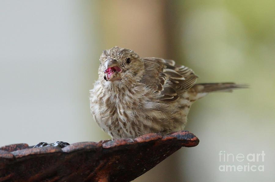 Birds Photograph - Beak Smakin Good by Lori Tordsen