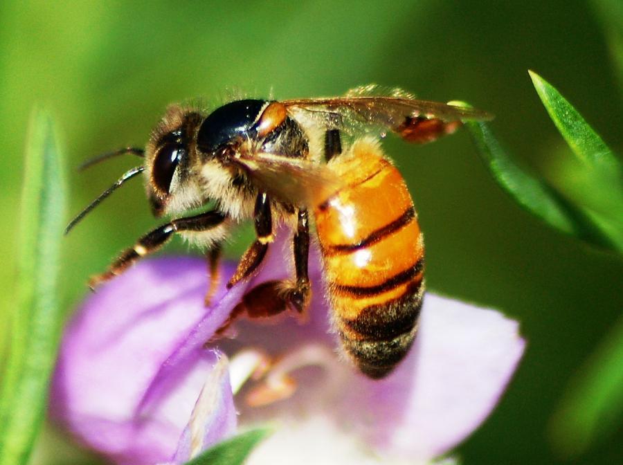 Bee Photograph by Meeli Sonn