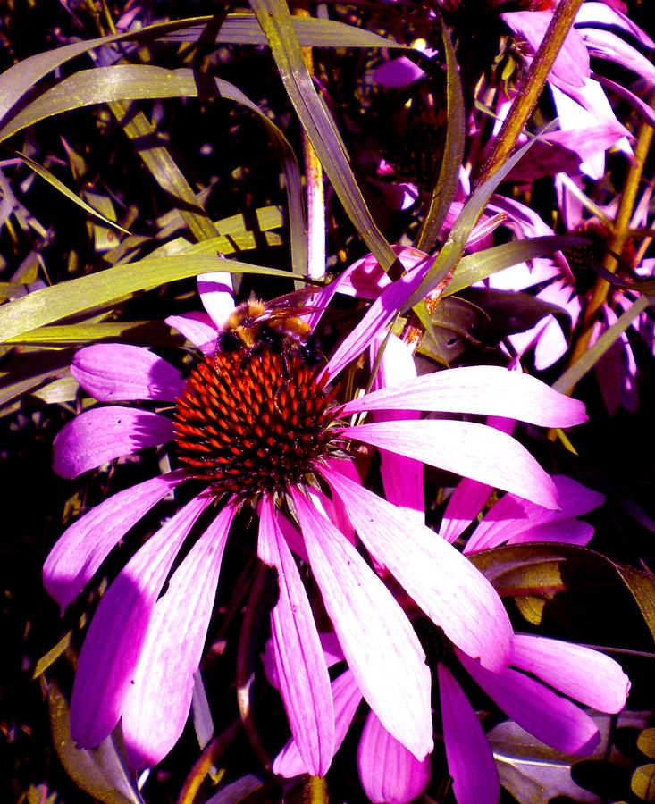 Purple Photograph - Bees Please by Renate Nadi Wesley
