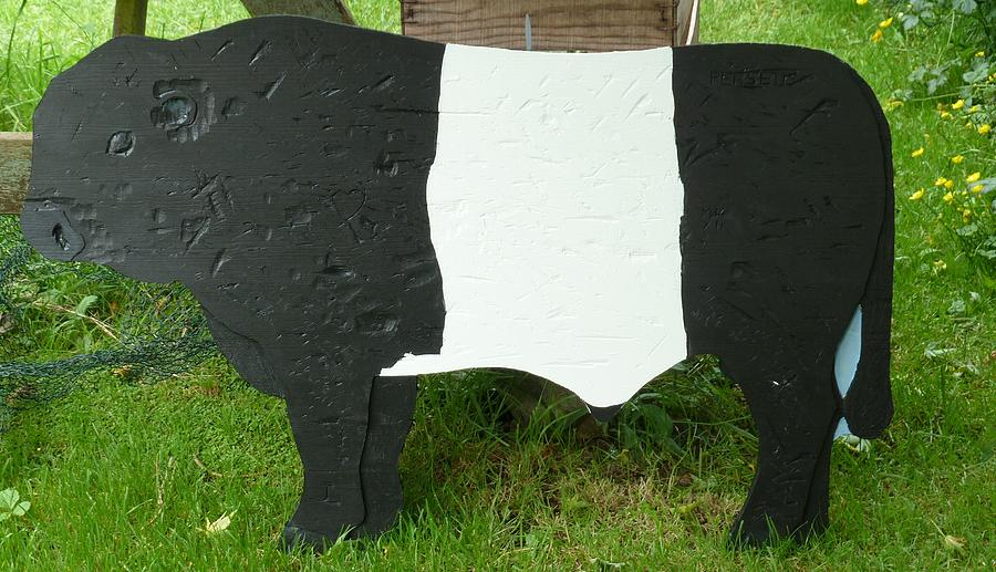 Pine Relief - Belted Galloway Bull by Jacqueline Walden