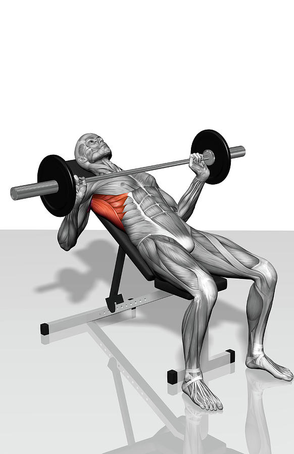 Vertical Photograph - Bench Press Incline (part 2 Of 2) by MedicalRF.com