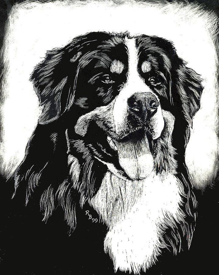 Bernese Mountain Dog By Rachel Hames