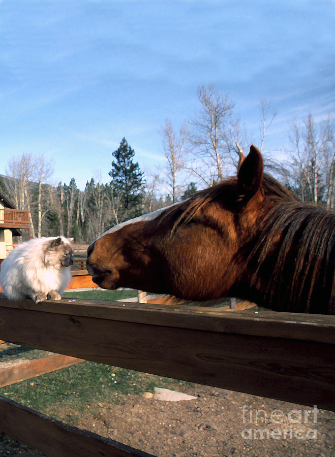 Usa Photograph - Best Friends by Thomas R Fletcher