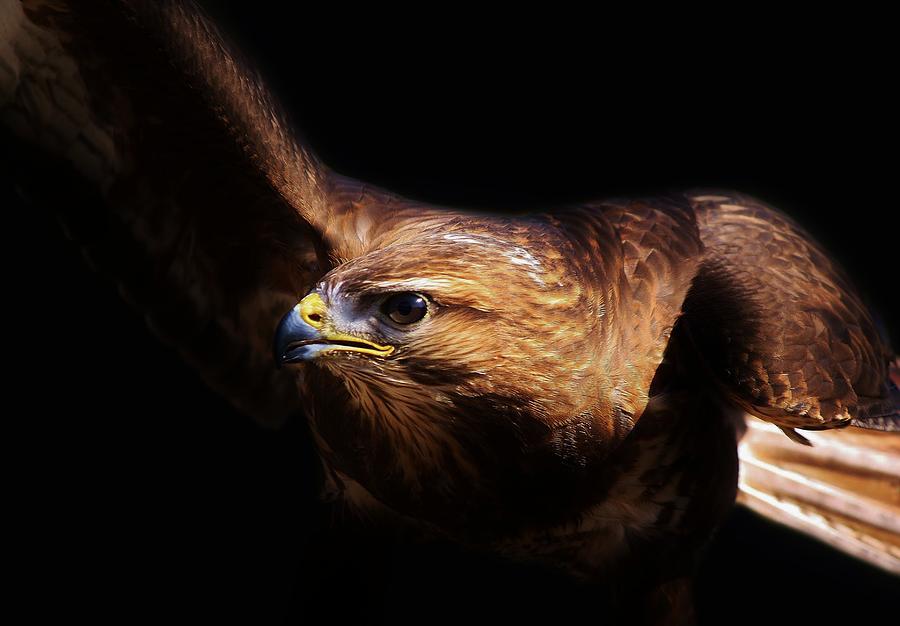Bird Photograph - Bird Of Prey by Paulette Thomas
