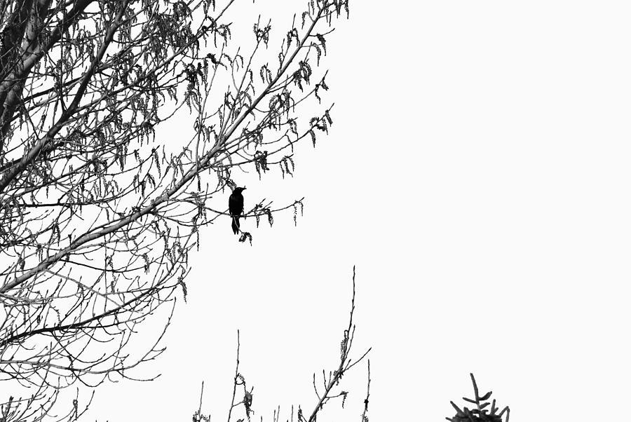 Abstract Digital Art - Black Bird 1 by Bill Kennedy