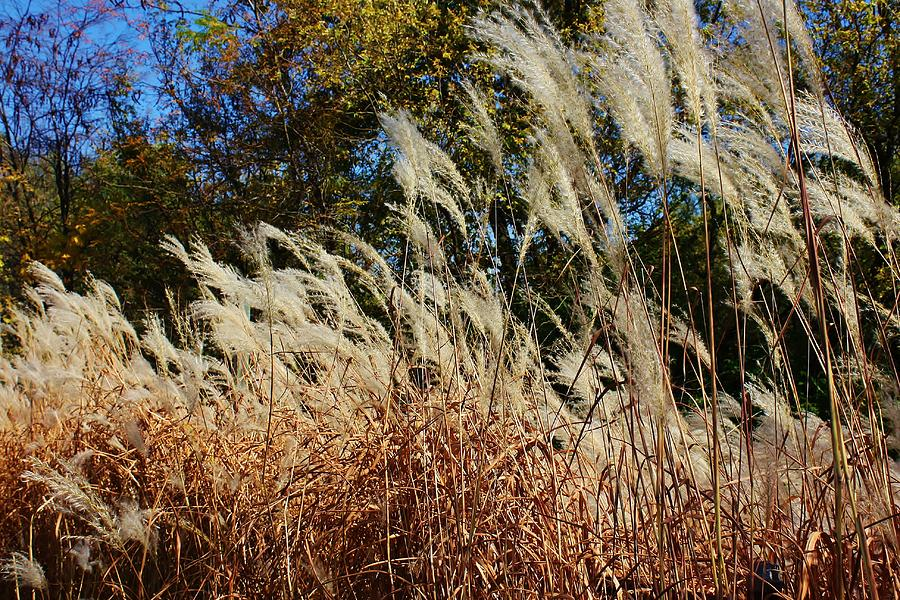 Grass Photograph - Blowing In The Wind by Bruce Bley
