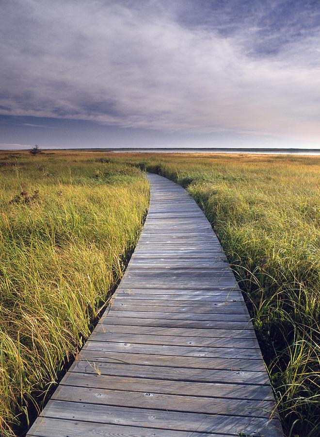 Salt marsh light penetration