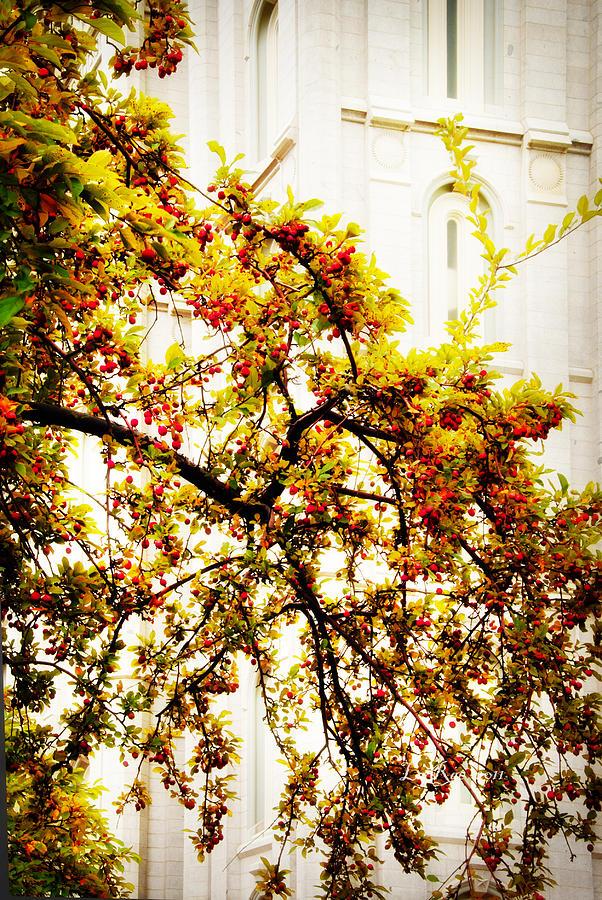 Salt Lake City Temple Photograph - Branch Of Heaven by La Rae  Roberts