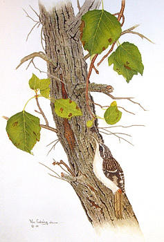 Birds Painting - Brown Creeper by Bill Gehring