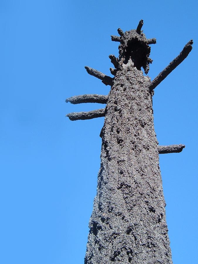 Nature Photograph - Burned Trees 3 by Naxart Studio