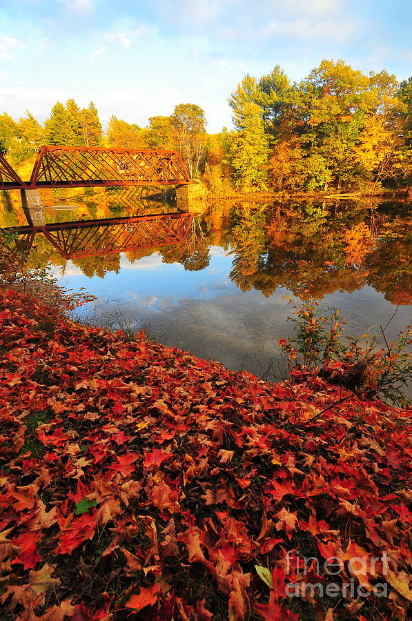 Pemi River Photograph - Burst Of Colors by Catherine Reusch Daley
