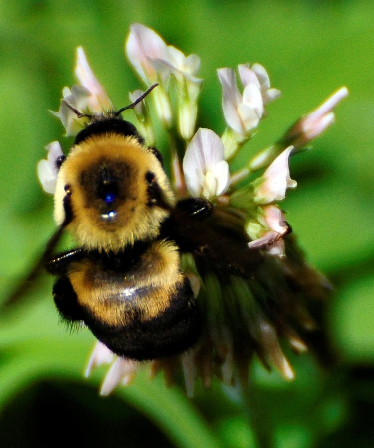 Bee Photograph - Busy Bee by Terri Albertson