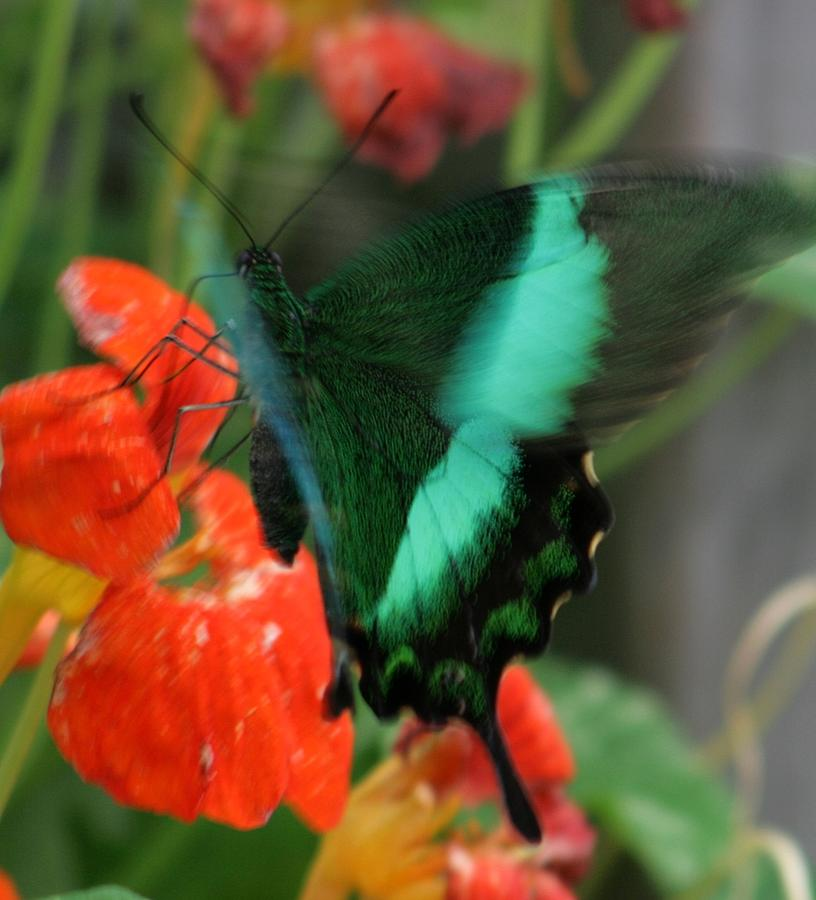 Nature Photograph - Butterfly Abstraction by Valia Bradshaw