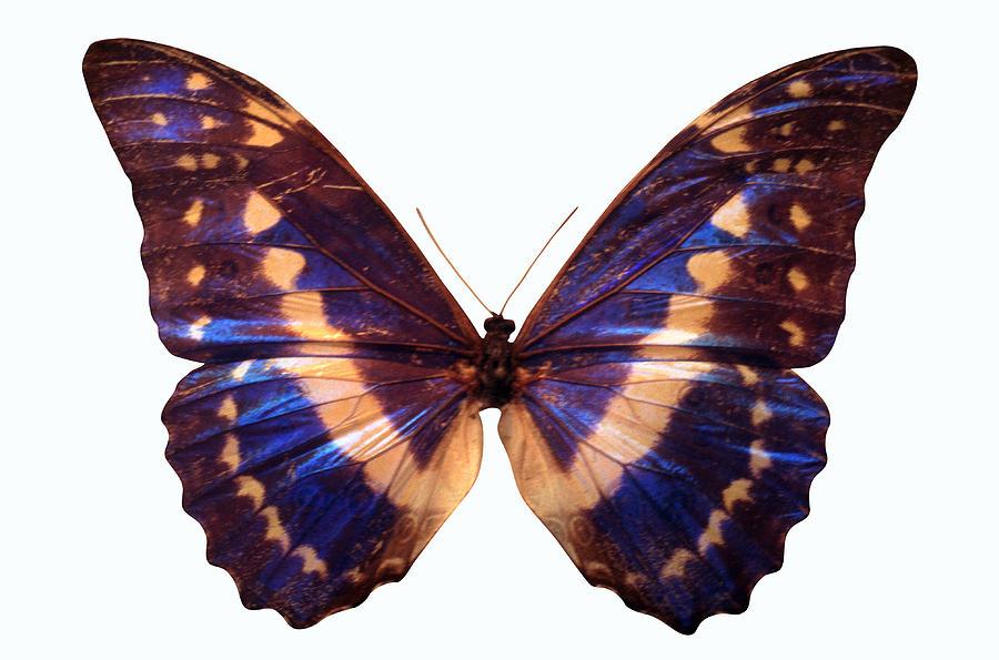 Horizontal Photograph - Butterfly by John Foxx