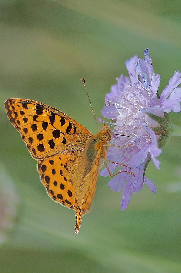 Butterfly On Right Position Photograph by Meeli Sonn