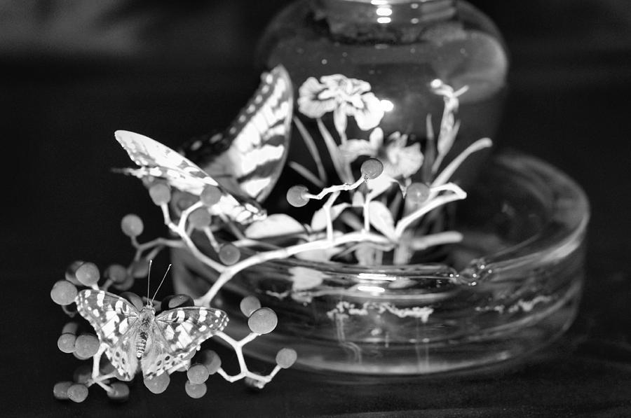 Butterflys Photograph by Gerald Kloss