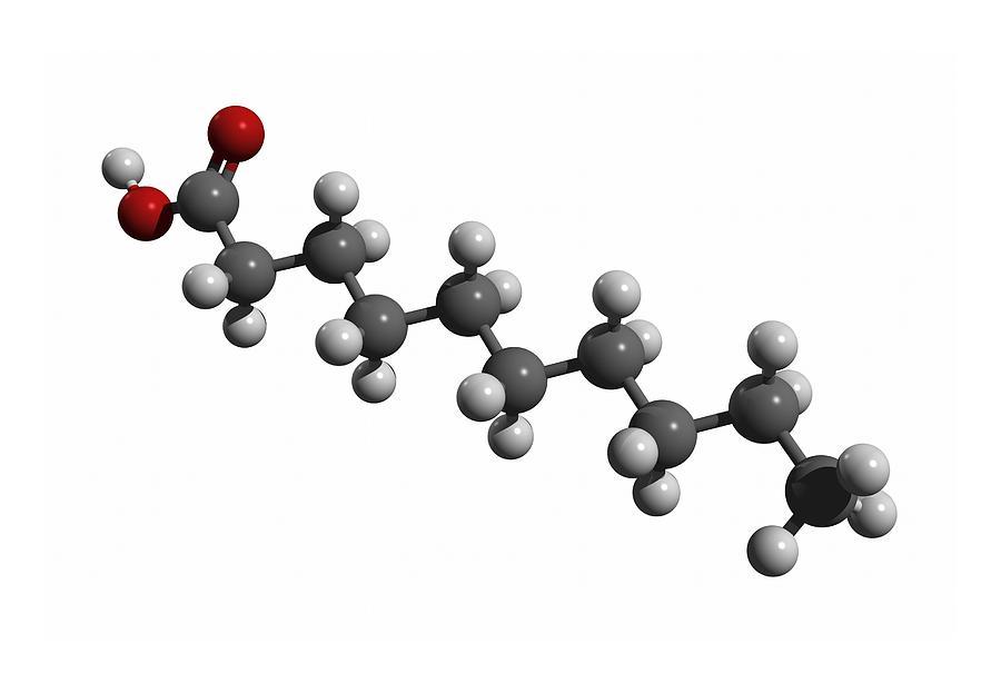 Capric Acid Photograph - Capric Acid Molecule by Friedrich Saurer