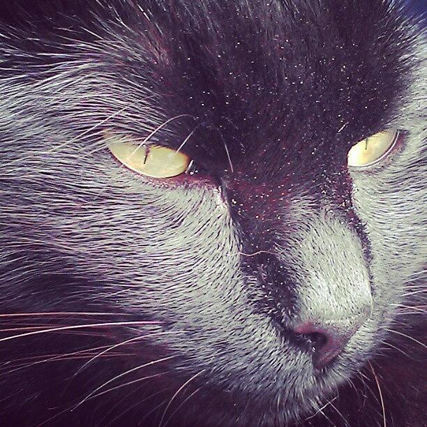Pussy Photograph - #cat #cats #tagsforlikes.com #catsagram by Jinxi The House Cat