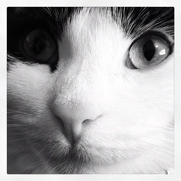 Cat Photograph - Cat portrait  by Rachel Williams