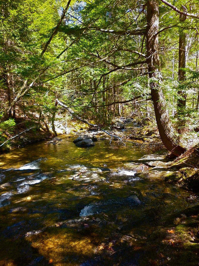Landscape Photograph - Childs Brook 6 by George Ramos