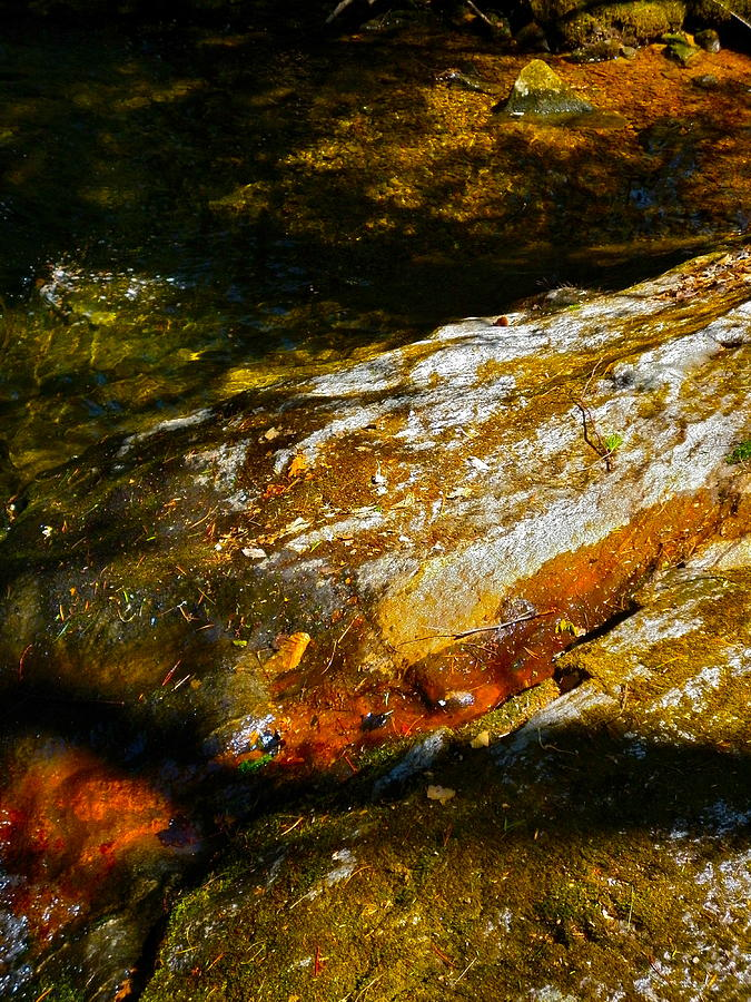 Landscape Photograph - Childs Brook Shadows 4 by George Ramos