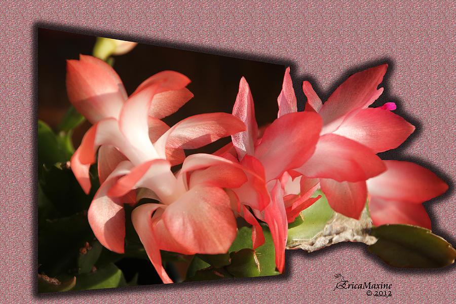 Tn Photograph - Christmas Cactus by EricaMaxine  Price