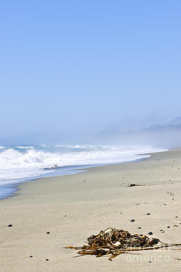 Pacific Photograph - Coast Of Pacific Ocean In Canada by Elena Elisseeva