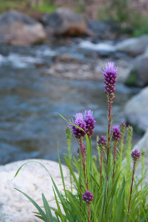 Colorado Wildflowers Photograph