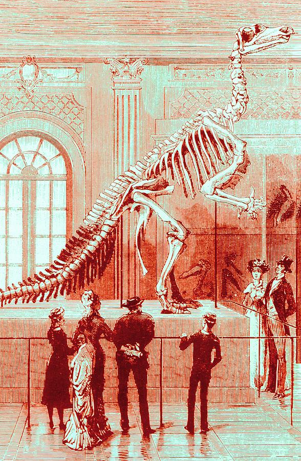 Museum Photograph - Coloured Engraving Of An Iguanodon Museum Exhibit by Mehau Kulyk