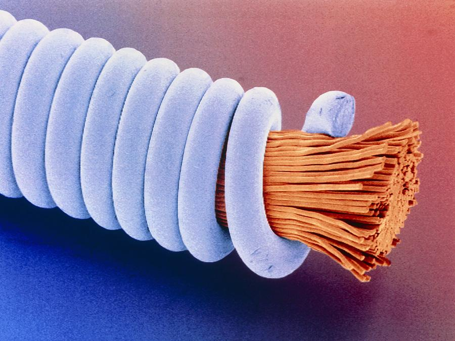 Guitar String Photograph - Coloured Sem Of superwound Guitar String. by Power And Syred