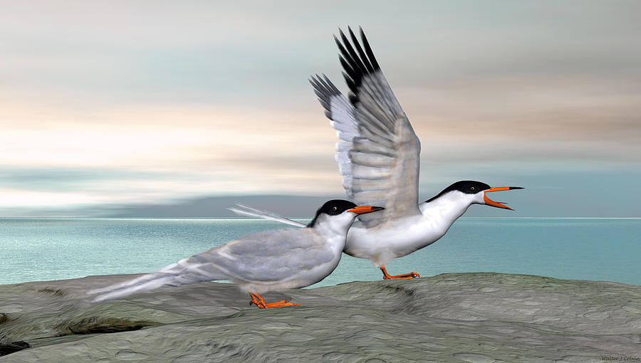 Common Tern Digital Art - Common Tern by Walter Colvin