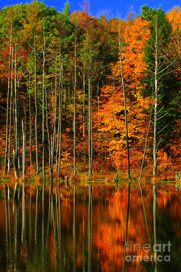 Leaves Photograph - Coxsackie New York State by Mark Gilman