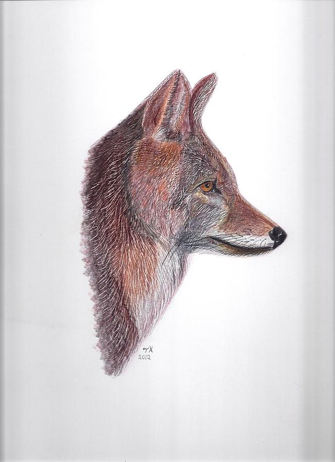 Framed Coyote Posters Drawing - Coyote by Tony  Nelson