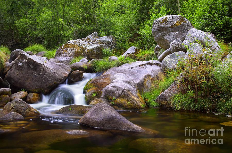 Autumn Photograph - Creek by Carlos Caetano