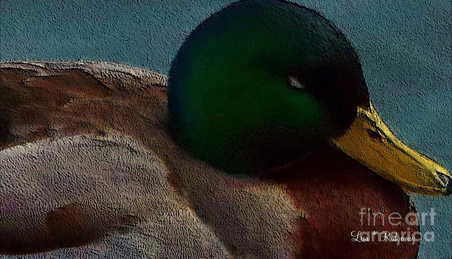 Pond Mixed Media - Dads Mallard Duck by Lisa  Ridgeway