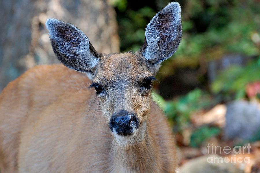Deer Photograph - Deer by Marsha Thornton